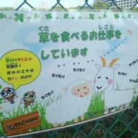 草を食べる仕事-thumb-200x200-1199